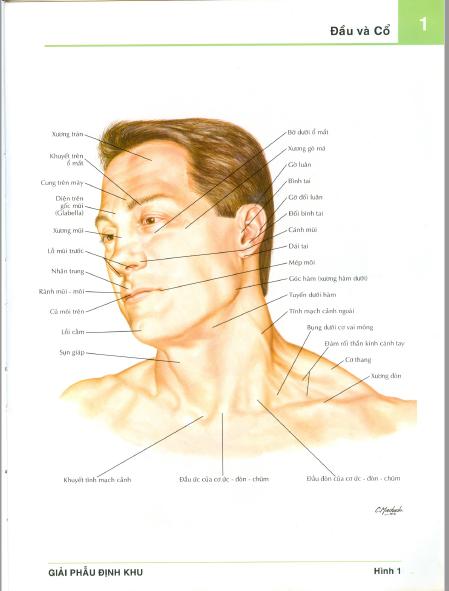 Atlas giải phẫu ngườiFrank H.Netter